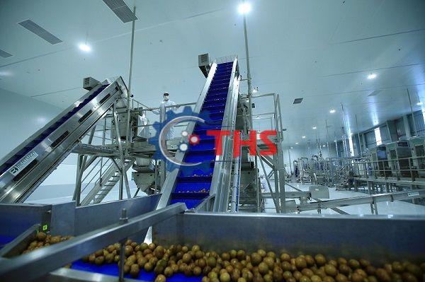 Băng tải thực phẩm PU đồng nhất đảm bảo vệ sinh an toàn thực phẩm