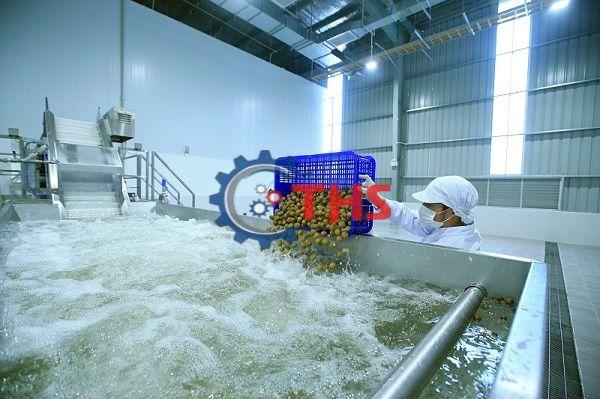 Băng tải nhựa ứng dụng nhiều trong ngành chế biến nhãn