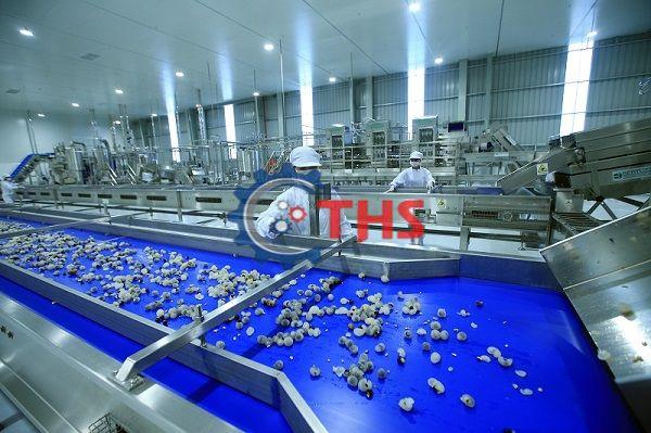Băng tải PU đồng nhất đảm bảo vệ sinh an toàn thực phẩm cao